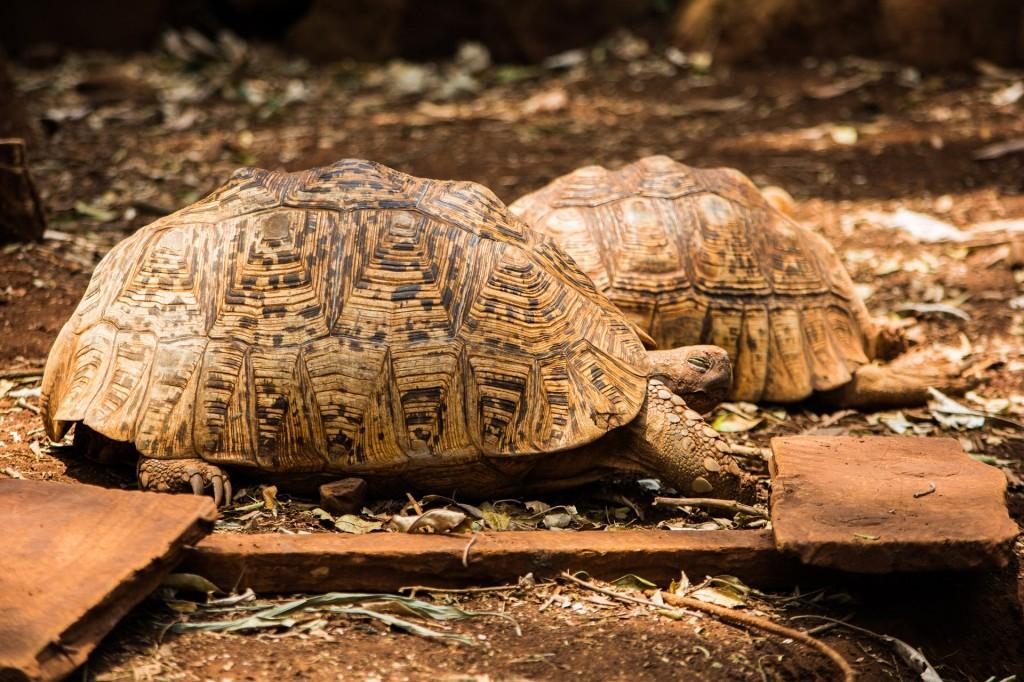tortoise-1279604_1920
